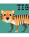 Affiche Tiger Ingela P. Arrhenius